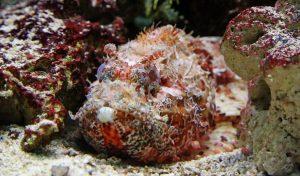 Giftigste vissen ter wereld
